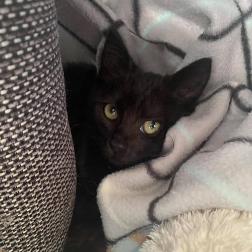 Opera Whinfrey ** 2nd Chance Cat Rescue**