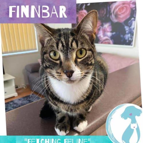 Finnbar