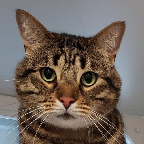 Leo (adoption Pending)