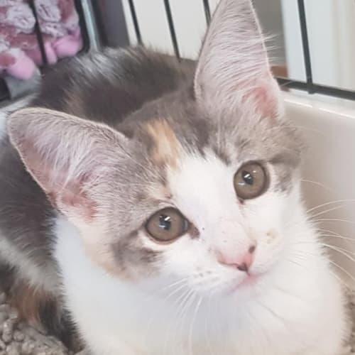 Kitty Katie