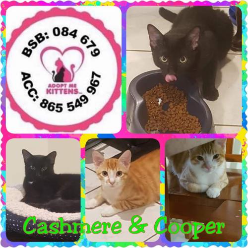 Cashmere & Cooper