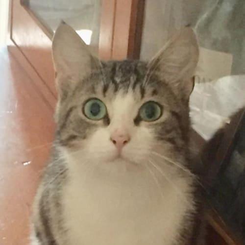 Kiki The Shy Cat
