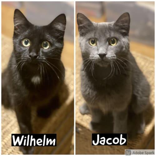 Jacob & Wilhelm: The Smooch Brothers!