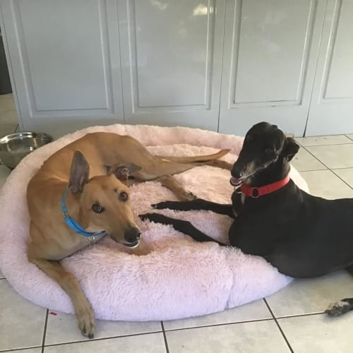 Molly and Bull - bonded pair