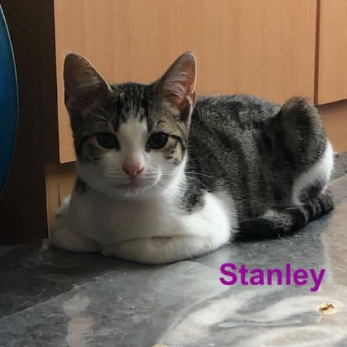 Stanley - Located in Preston