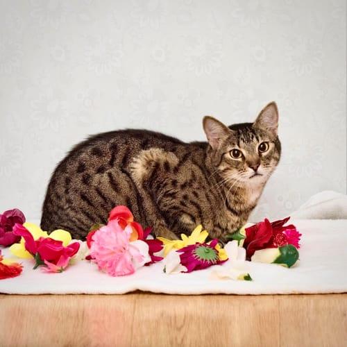 Chloe ~ young female cat
