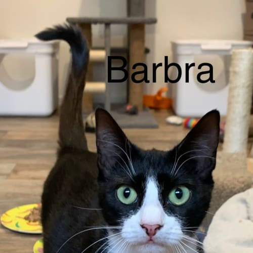 Barbra (Located in Altona Meadows)