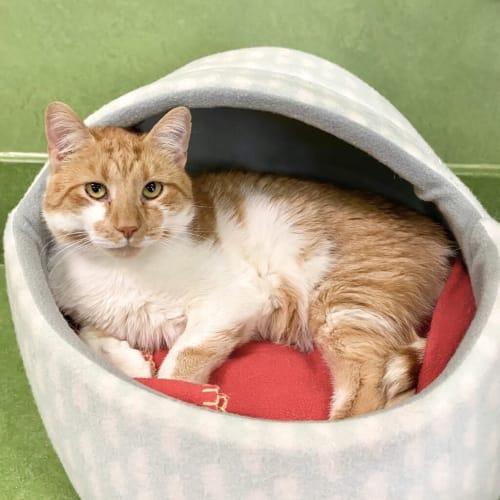 Jasper (adoption Pending)