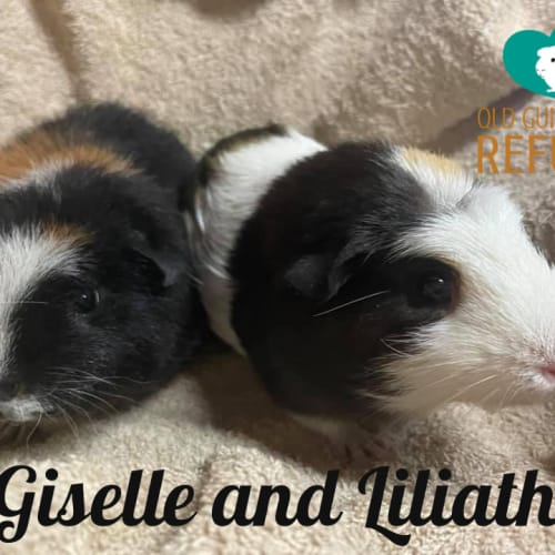 Giselle and Liliath
