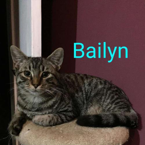 Bailyn