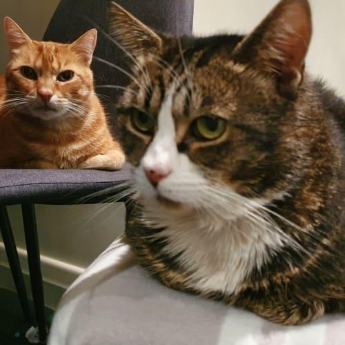 Eric & Benny (Located in Thornbury)