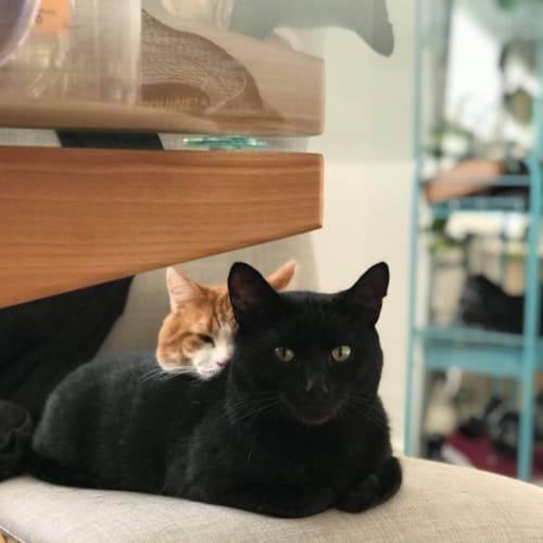 Bear and Salem (bonded)