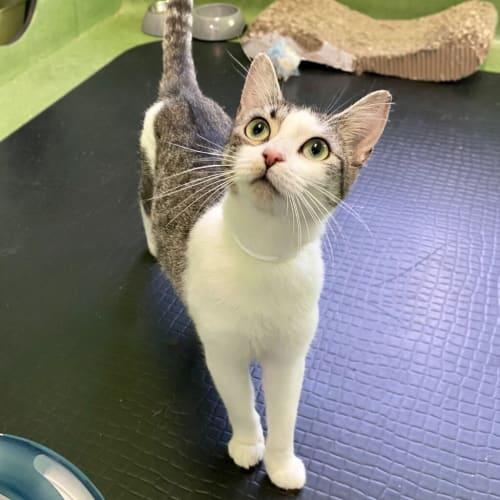 Tabitha (adoption Pending)