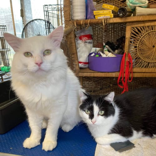 Daryl (white - bonded with Gary block and white))