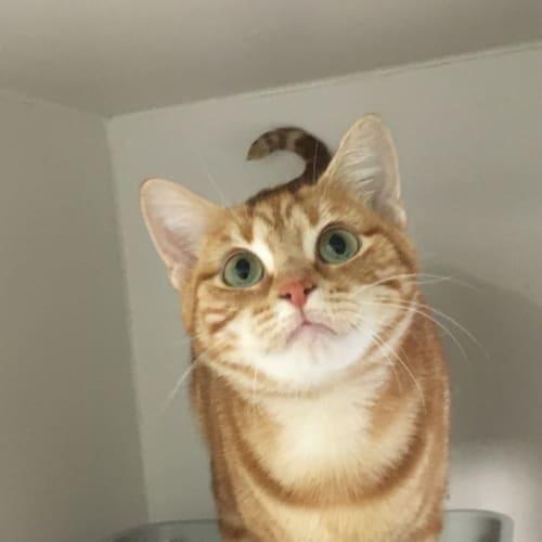 Essie (adoption Pending)