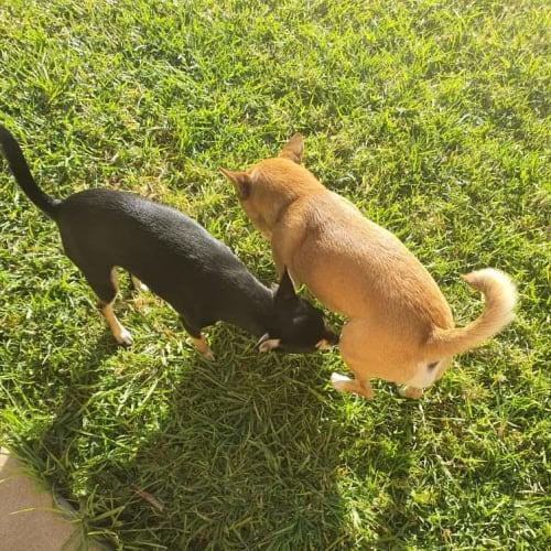 Leo and Mia