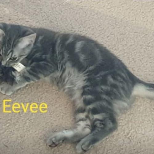 Eevie