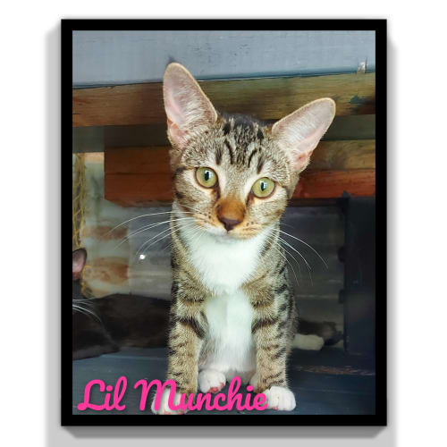 Lil Munchie