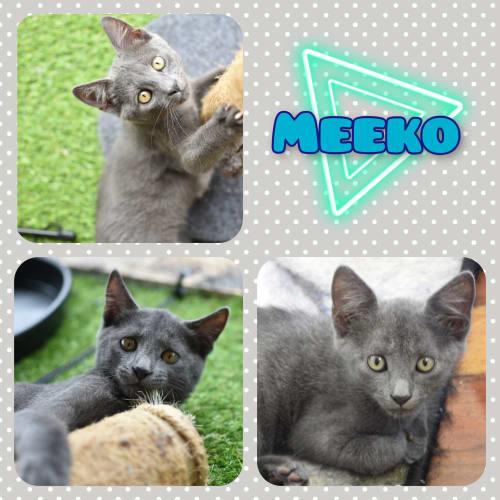 Meeko