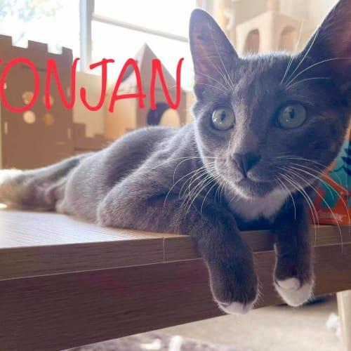 Yonjan