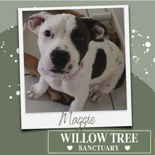 Magnolia (Maggie)