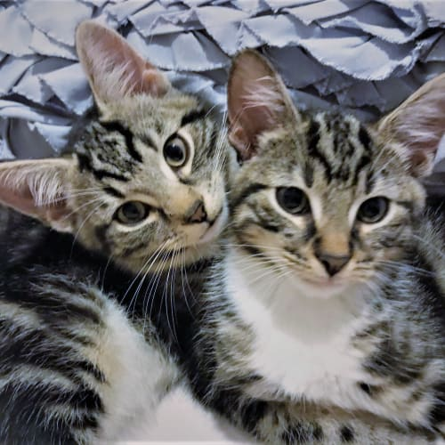 Stefan & Damon ^^Dandy Cat Rescue^^