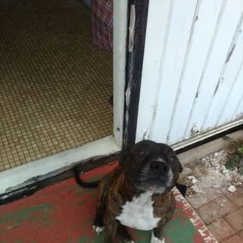 Foster Carer Needed-Norman