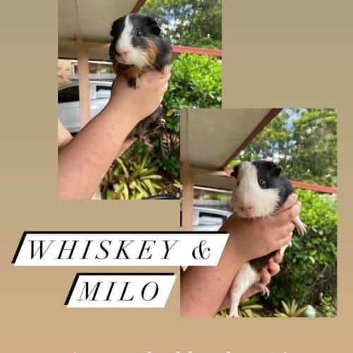 Whiskey & Milo