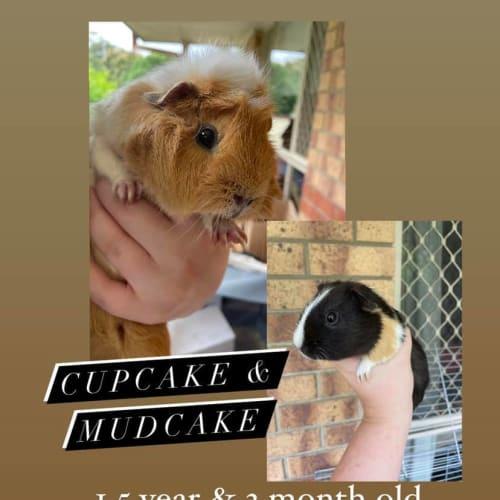 Cupcake & Mudcake