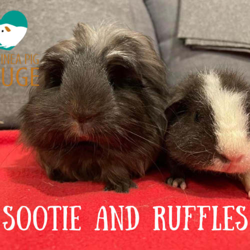 Sootie and Ruffles