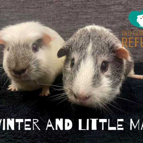 Winter and Little Man