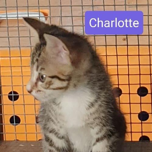 Charlotte and Murphy