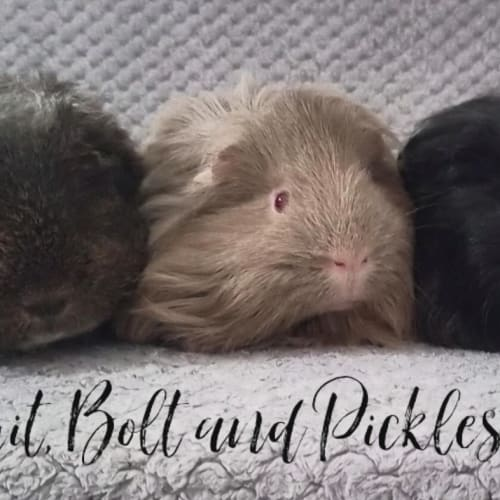 Biscuit, Bolt and Pickles