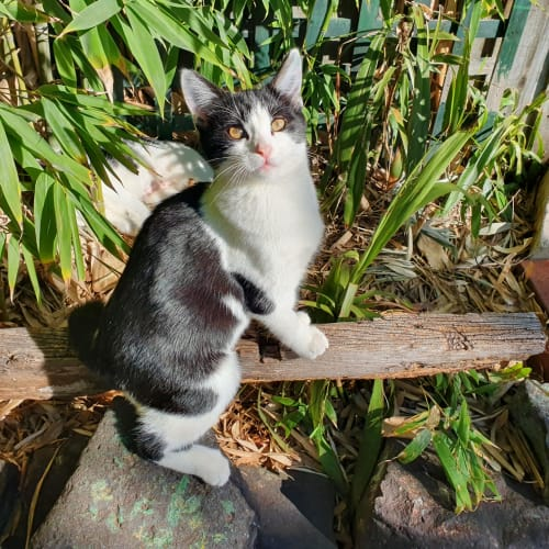 Pepples **2nd Chance Cat Rescue**