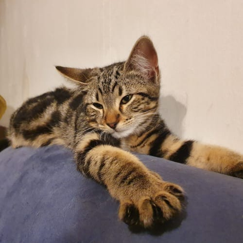 Fang **2nd Chance Cat Rescue**