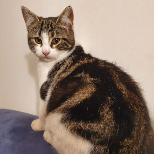 Fatso **2nd Chance Cat Rescue**