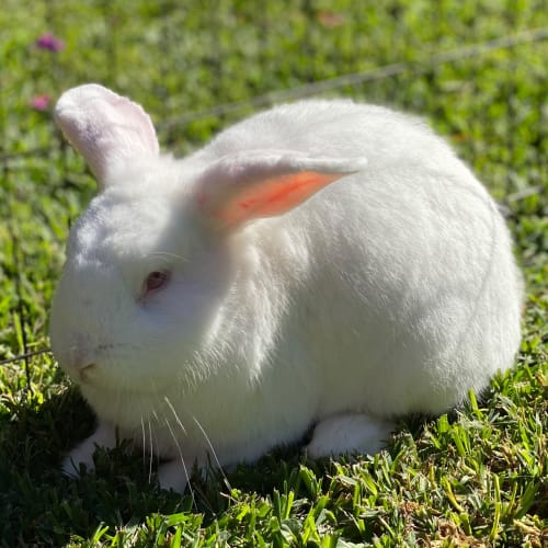 Thumper 🥕