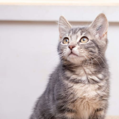 Narele **2nd Chance Cat Rescue**