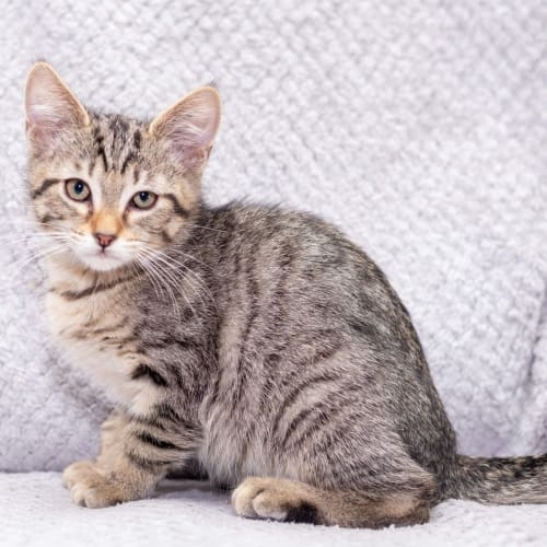 Clint **2nd Chance Cat Rescue**