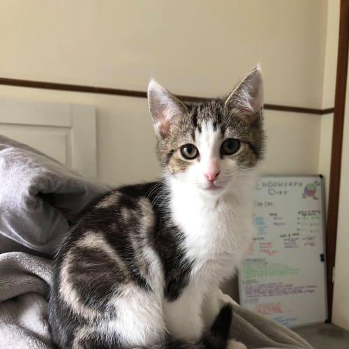 Bo Peep **2nd Chance Cat Rescue**