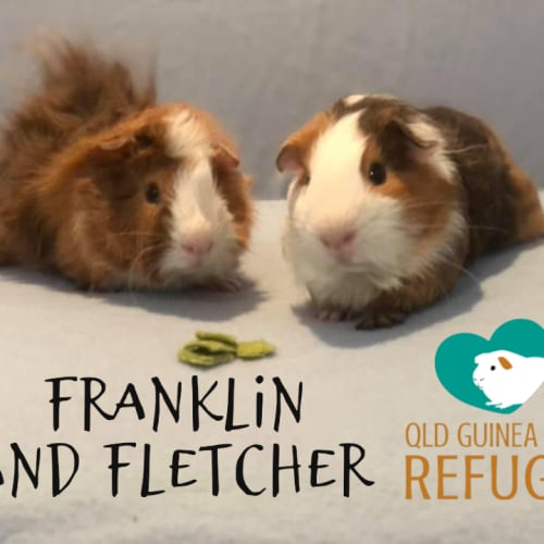 Franklin and Fletcher