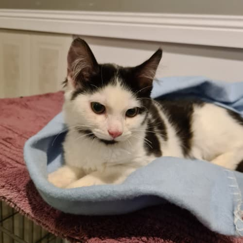 C.Cee **2nd Chance Cat Rescue**