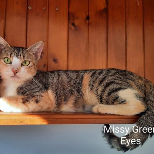 Missy Green Eyes