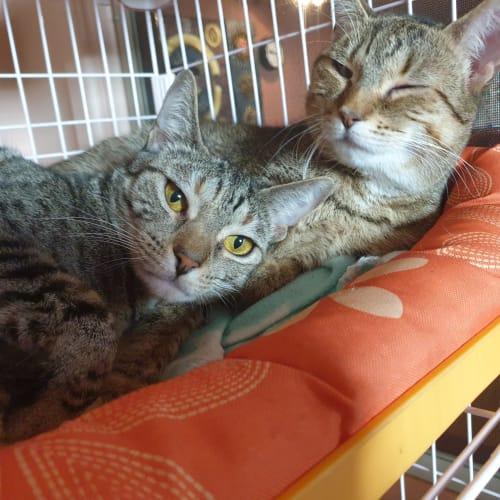 Bonded Beauties: Karmi & KaTora