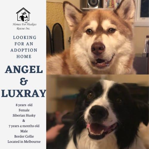 Angel & Luxray