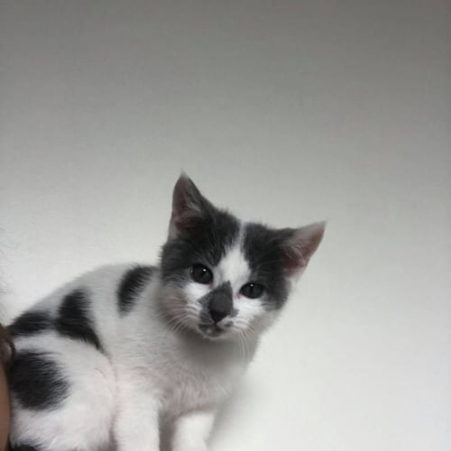 Jem **2nd Chance Cat Rescue**