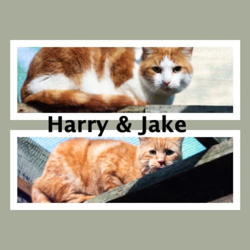 Harry & Jake (bonded brothers)