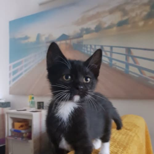 Roby **2nd Chance Cat Rescue**