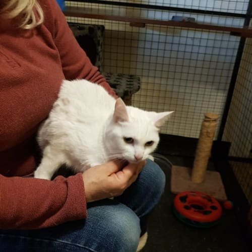 Sunday ** 2nd Chance Cat Rescue**