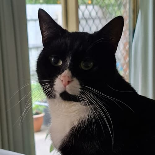 Chubbly **2nd Chance Cat Rescue**